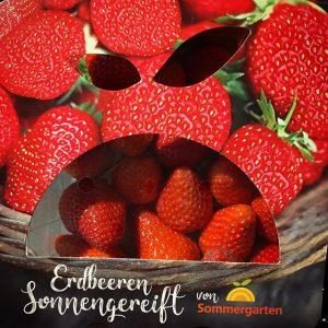 Erdbeeren den ganzen langen Weg aus Spanien hierher gekarrt. Da kann man schon mal grumpy werden.. #thingswithfaces #grumpy #erdbeeren